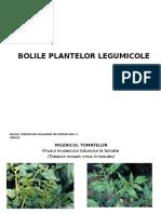 Bolile Plantelor Legumicole - Prezentare
