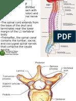 Spinal Cord Injury Scribd