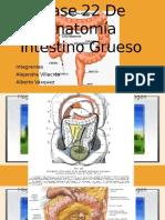 Clase de Anatomía intestino grueso
