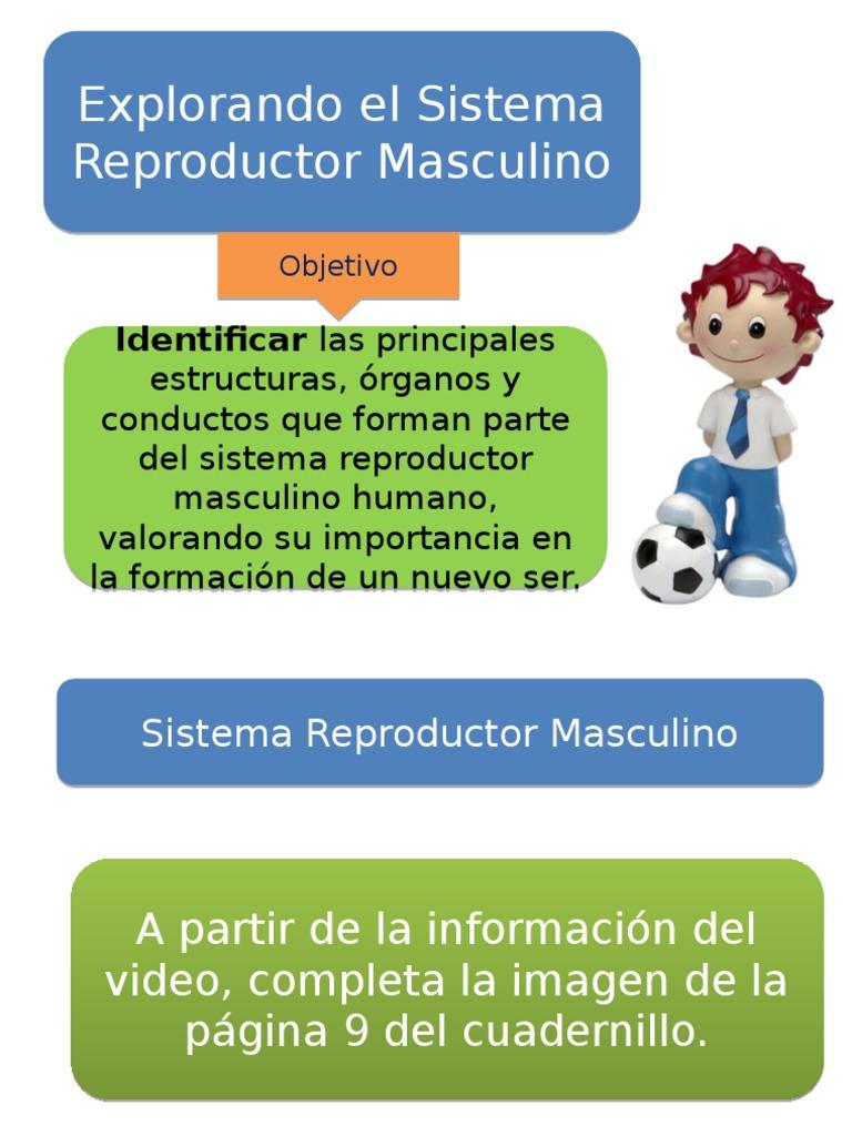 Clase-4-y-5-Sistema-reproductor-masculino.pptx