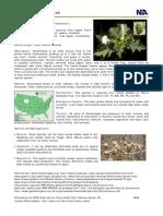 Emailing jimsonweed.pdf