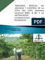 Biologia de La Roya-jorge Gongora