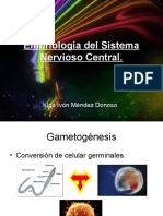 2.Embriologia (1)