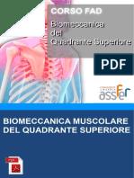 Biomeccanica Muscolare Quadrante Superiore
