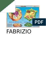 Fabrizio Ciencia
