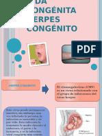 Sida Congenita