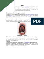 sistema estomatognatico.docx