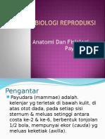 Anatomi Dan Fisiologi Payudara Akbid