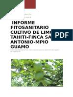 INFORME FITOSANITARIO LEMAYA