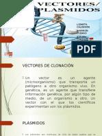 VECTORES PLASMIDOS