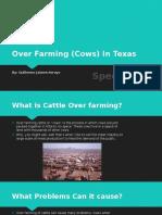 over farming  cows  in texas