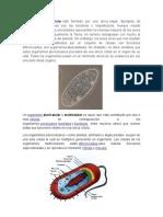 Organismo Celular