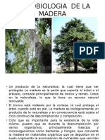Microbiologia de La Madera