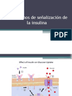 Mecanismos de Señalizacion de Insulina, Glucolisis, Gluconeogenesis