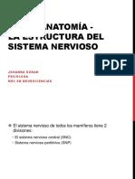 9. NEUROANATOMÍA