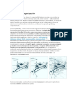 Plasticidad Neuronal y Cognición
