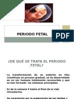 Periodo fetal Embriologa