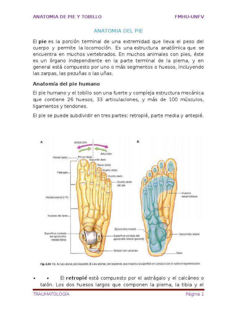 Anatomia Del Pie y tobillo