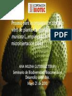presentacion_microinjertacion1