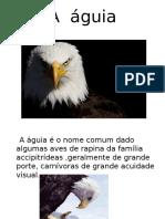 A  águia.pptx