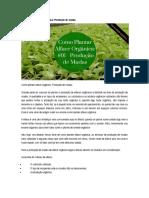 Como Plantar Alface Orgânica