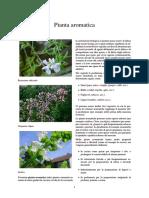Pianta aromatica.pdf