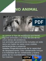 Reyno Animal