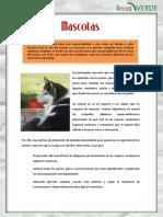 Mascotas Animales Compania