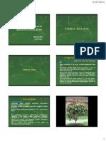 Medicinales Amazonicas (B.Económica).pdf