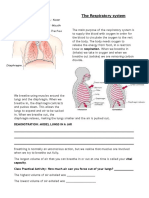 Respiratory System Notes