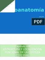 Neuroanatomiai 8 130811133129 Phpapp01