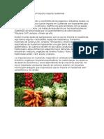 Conoce Más Sobre Que Productos Importa Guatemala