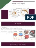 Placenta y Sus Anexos