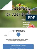 Anfibios Evolucion Expo