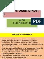 ANATOMI DAUN DIKOTIL