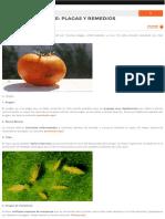 Cultivo Del Tomate_ Plagas y Remedios - La Huertina de Toni