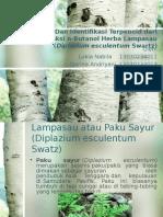 Isolasi Dan Identifikasi Terpenoid Dari Fraksi N-Butanol Herba