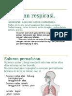 KP 3.1 Respirasi