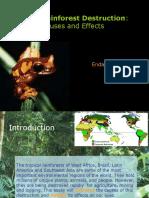 rainforest destruction-cause and effect