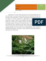 Flora of Malkapuram