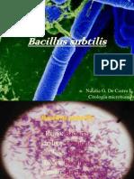 Bacillus Subtilis (PDF)
