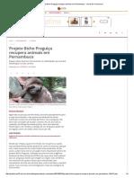 Projeto Bicho Preguiça Recupera Animais Em Pernambuco - Jornal Do Commercio