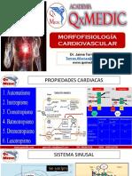 Morfología Cardiovascular