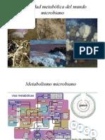 quimiotrofos1.pdf