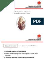 Introducción Sistema Cardiovascular