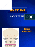 Anatomi Pelvis Fani