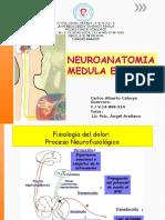 Neuroanatomia Actividad de Medula Espinal Trabajo