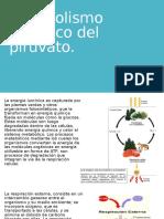 Metabolismo Aerobico Del Piruvato