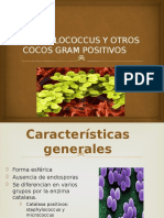 staphylococcusyotroscocosgrampositivos-121218060429-phpapp01