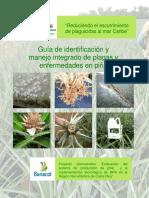 guia identificacion5.pdf